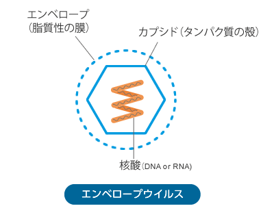 エンベロープウイルス